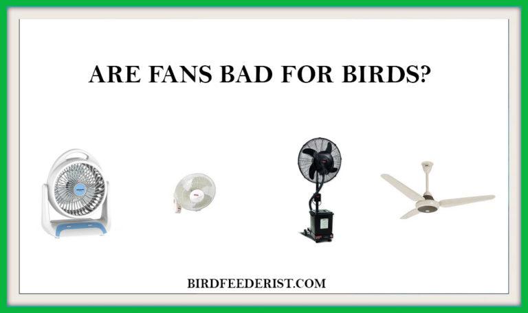 Are Fans bad for birds? by BirdFeederist