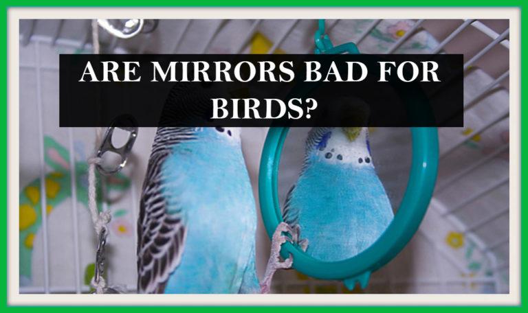 Are mirrors bad for birds? by BirdFeederist