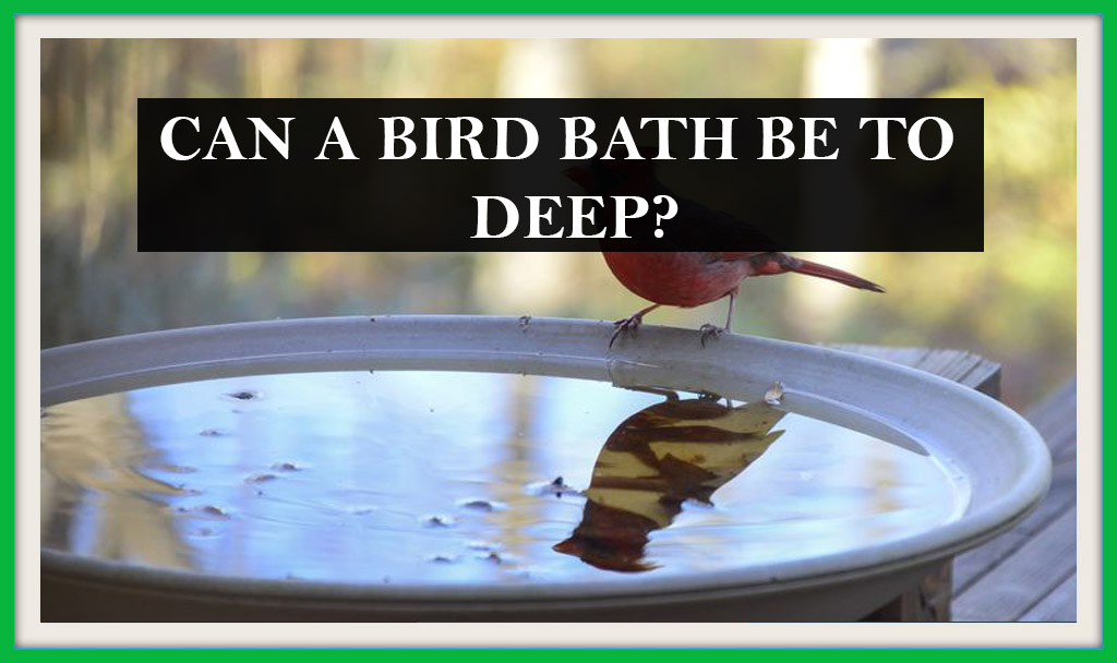 CAN A BIRD BATH BE TO DEEP