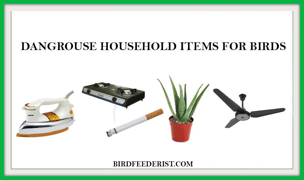 DANGROUSE HOUSEHOLD ITEMS FOR BIRDS