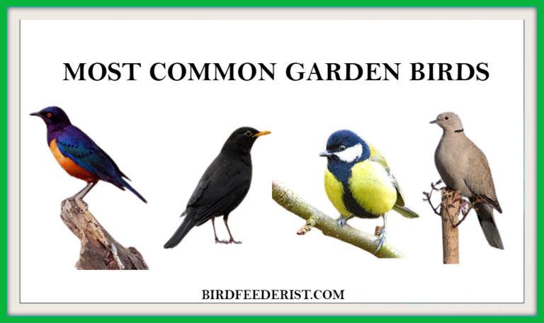 The 10 Most Common Garden Birds by BirdFeederist