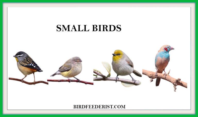 Top 8 Popular Small birds in World by Birdfeederist