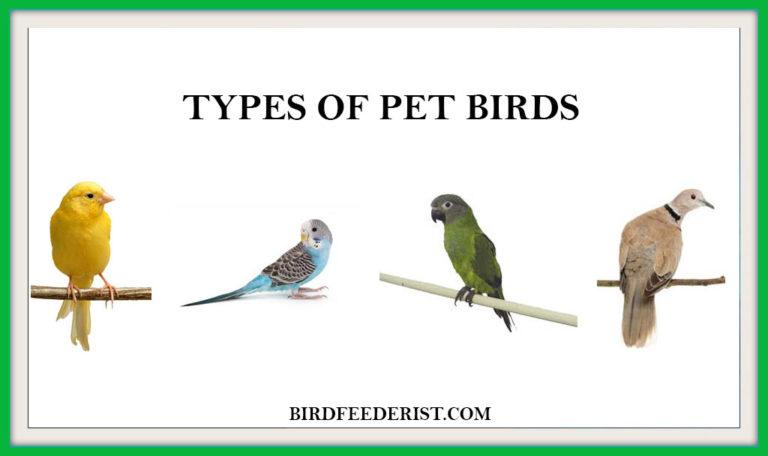 10 Most Popular Types of Pet birds by BirdFeederist