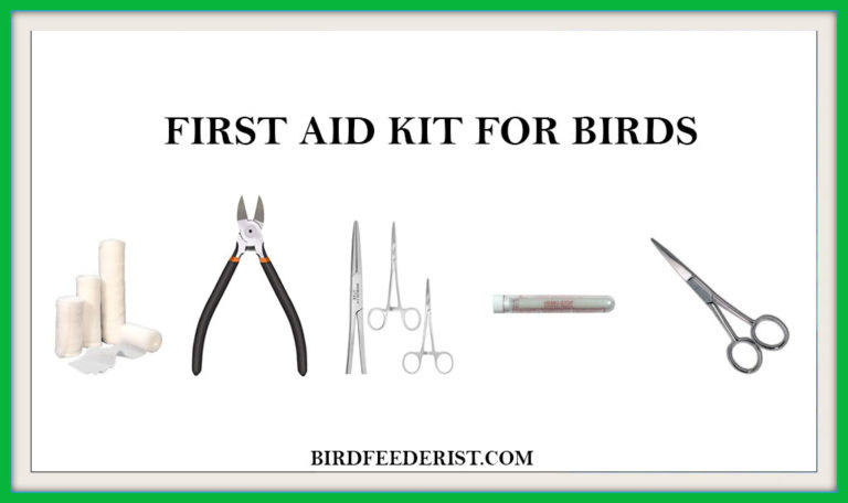 First Aid Kit for Birds Things That You Must have in Your Home