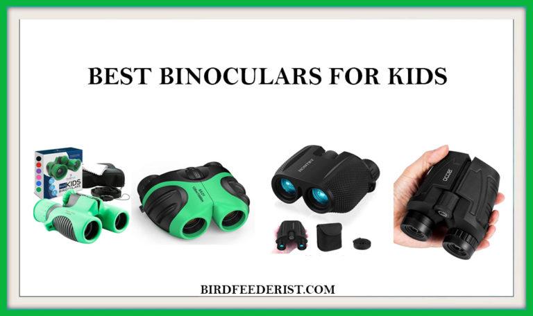 The 5 Best Binoculars for Kids 2020 Expertly Reviewed by BirdFeederist