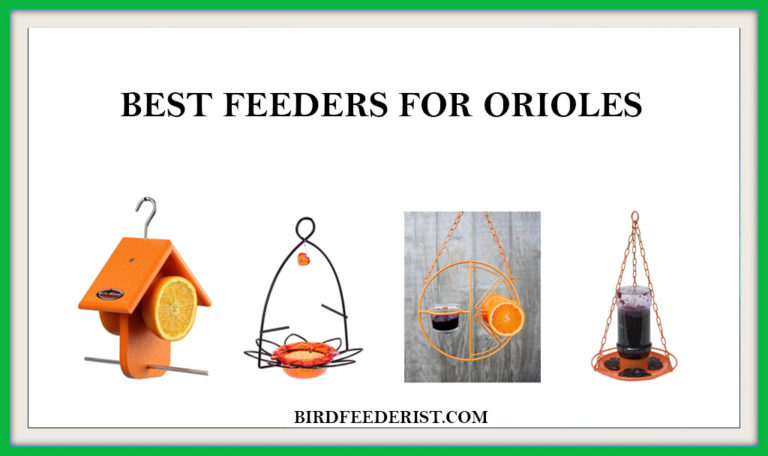 The 5 Best feeders for Orioles 2020 Expertly Reviewed by BirdFeederist