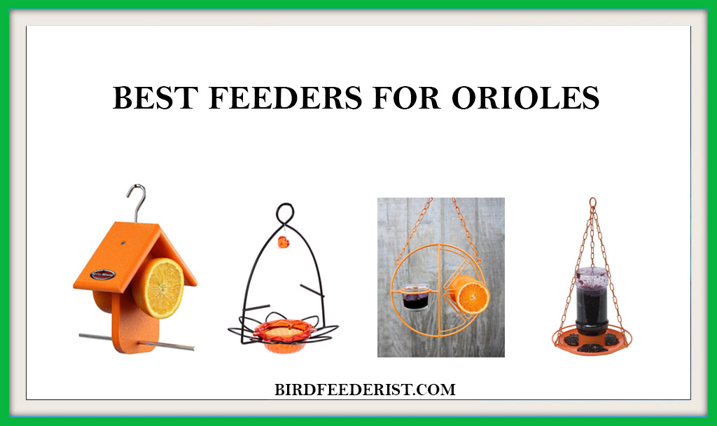BEST FEEDERS FOR ORIOLES
