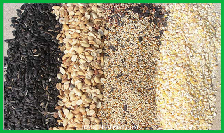 Cheapest Bird Food / Cheapest Places to Buy Bird Food? by BirdFeederist