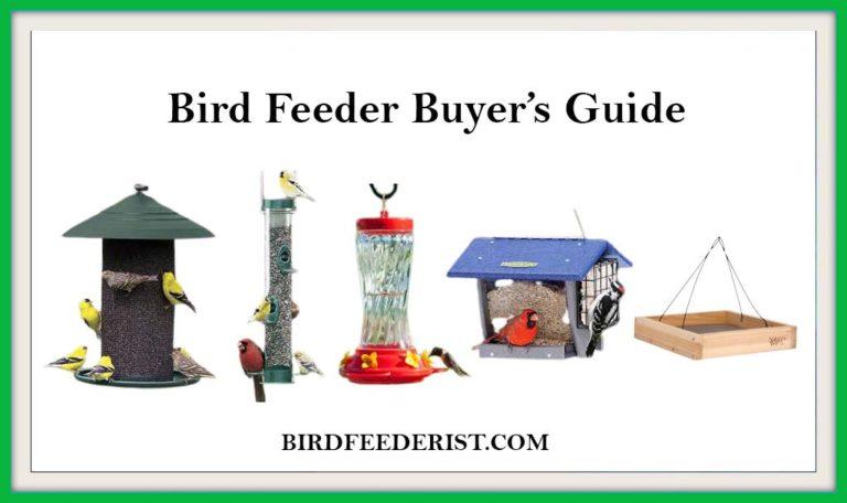 Bird Feeder Buyer's Guide 2021 by Birdfeederist