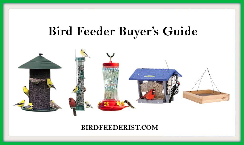 Bird feeder buyer guide