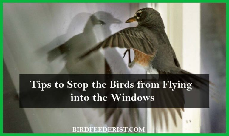 How to stop birds from flying into the windows? by Birdfeederist