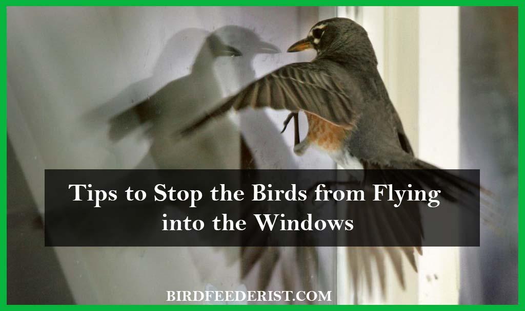 Stopping the birds window striking